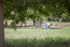 Agriculture-0043